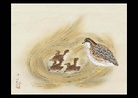 mother and children japanese quail by senjin gokura