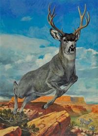 mule deer by douglas allen