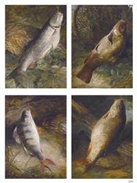 four studies of english freshwater fish: chub, tench, perch and carp by frederick richard lee
