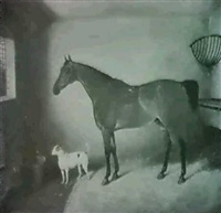 a bay hunter in a stable with a terrier by george jackson