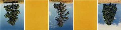 ponderosa pines princeton bccat hi way yellow in 5 parts by rodney graham