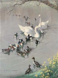 swans, ducks and moorhens by vernon ward