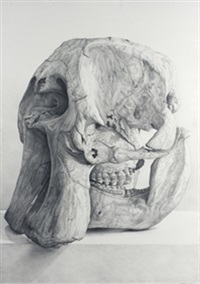 craneo de elefante by claudio bravo