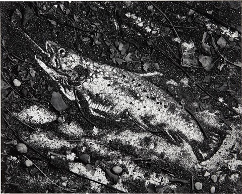 trout after courbet from pictures of soil by vik muniz