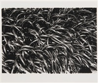 how to create a beautiful picture 12: summer grass by daido moriyama