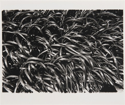 how to create a beautiful picture 12 summer grass by daido moriyama