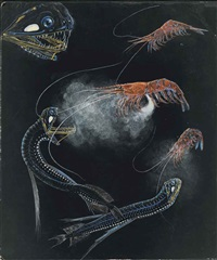 shrimp and fish of the abyss by e.j. geske