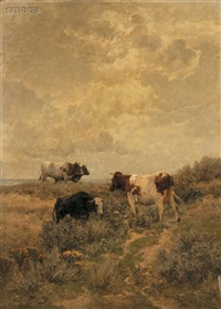 cows grazing in the dunes by hermann baisch