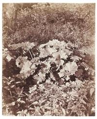 feuilles et sous-bois by eugène atget