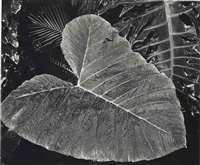 leaf, hawaii by brett weston