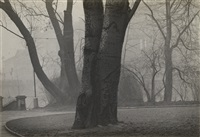 tree trunks in fog by josef sudek