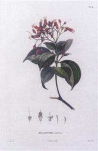 bonpland's flore medicale by auguste bouquet