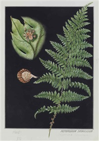 ferns (3 works) by e.j. geske
