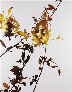 artwork by james welling