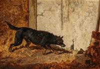 dog ratting by vincent de vos
