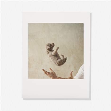 puppies portfolio of 8 by william wegman