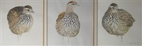 francolin (study; 3 works) by leigh voight