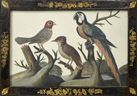 a blue and gold macaw and other exotic birds in basso relievo in an original floral and trellis black and gilt japanned frame by samuel dixon