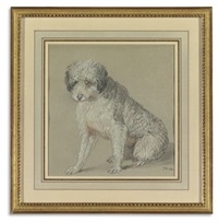 a poodle (study) by james ward
