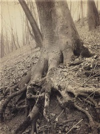 tree roots, st. cloud, 1906 by eugène atget