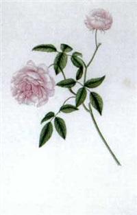 rose by ida lenkey