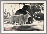 photo of elephants and antelope by peter beard