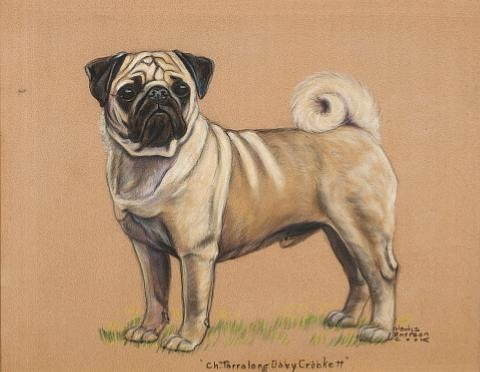 champion quotterralong davy crockettquot standing pug another smllr 2 works by gladys emerson cook