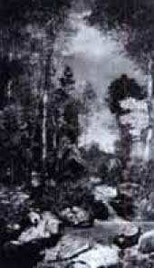 frühlingswald by walter küng