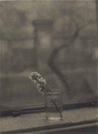 bouquet, 1950 by josef sudek