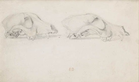 two studies of a skull by eugène delacroix