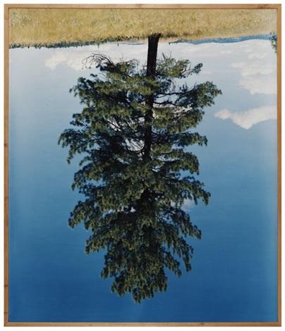 ponderosa pine iv by rodney graham