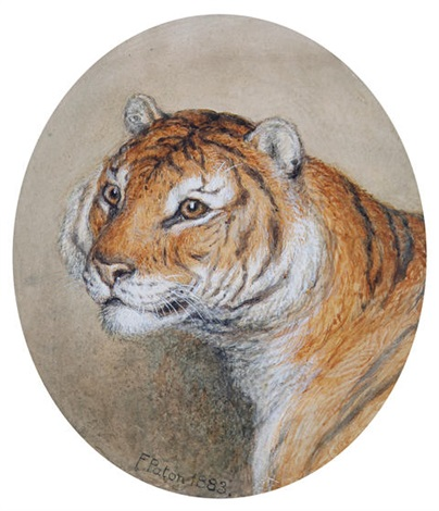 head of a tiger study by frank paton