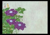 clematis by meiji hashimoto