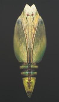 untitled (chrysalis) by adam fuss