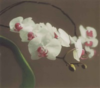 orchid (version i) by gerhard richter