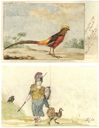 a golden pheasant in a landscape by jabes heenck