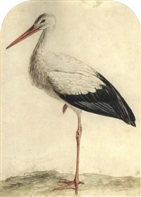 a stork by jan christiaan sepp