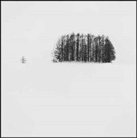 copse and tree, mita, hokkaido by michael kenna