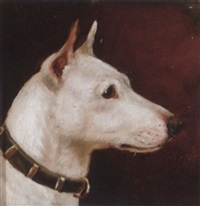 a bull terrier by edward aistrop