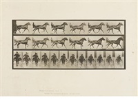 animal locomotion by eadweard muybridge