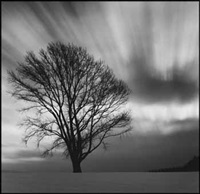 philosopher's tree, study 3, biel, hokkaido by michael kenna