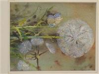 dandelion by edwin john alexander