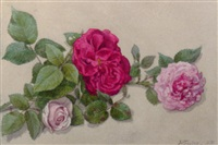 a still life with pink roses by willem de famars testas
