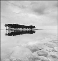 pine trees, study 2, wolcheon, gangwondo, south korea by michael kenna