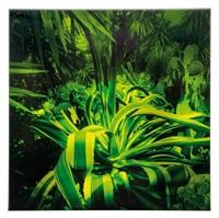 tentaculuxus by alfons alt