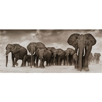 elephants on the move, amboseli by nick brandt