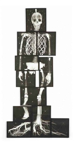 missing link x ray in 11 parts by matthew day jackson