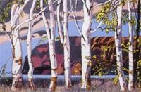 birch trees by paul rodrik