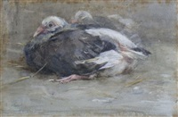 young pigeons by edwin john alexander