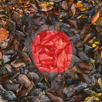 springtime by andy goldsworthy